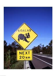 Koalas next 20k
