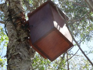 Nest Box in tree