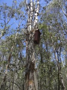 Nest Box up high